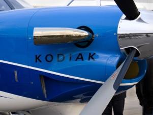 """""""Face to Face with a Kodiak"""""""