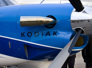 """Face to Face with a Kodiak"""